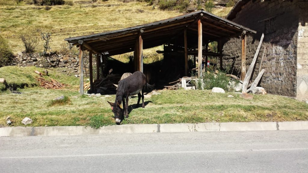 Donkey on the side of the road