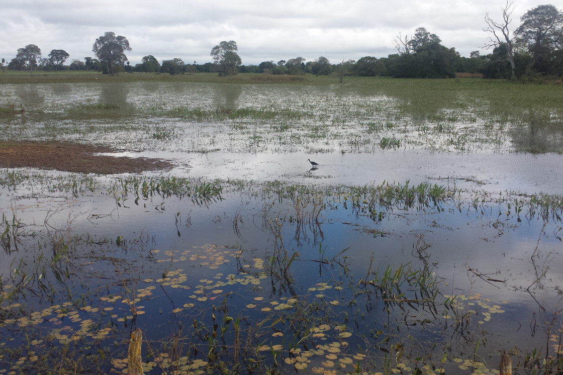 Pantanal wet lands