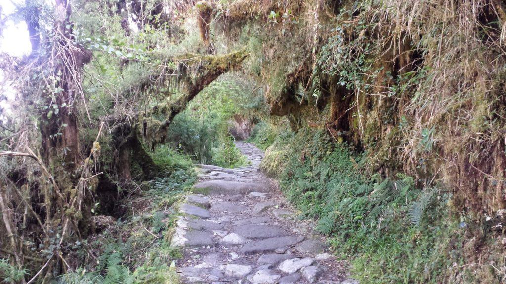 Rocky green path