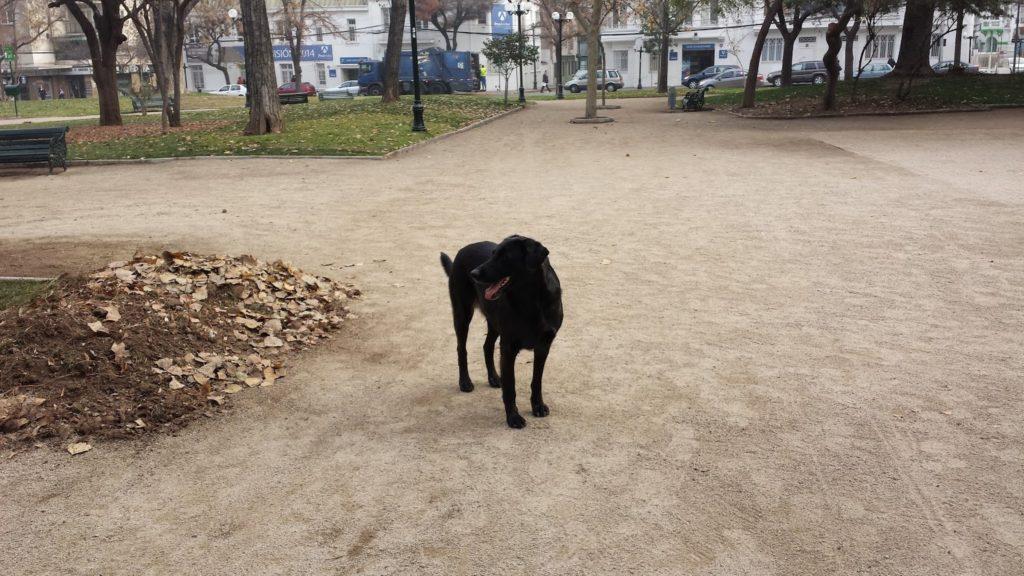 Santiago dog