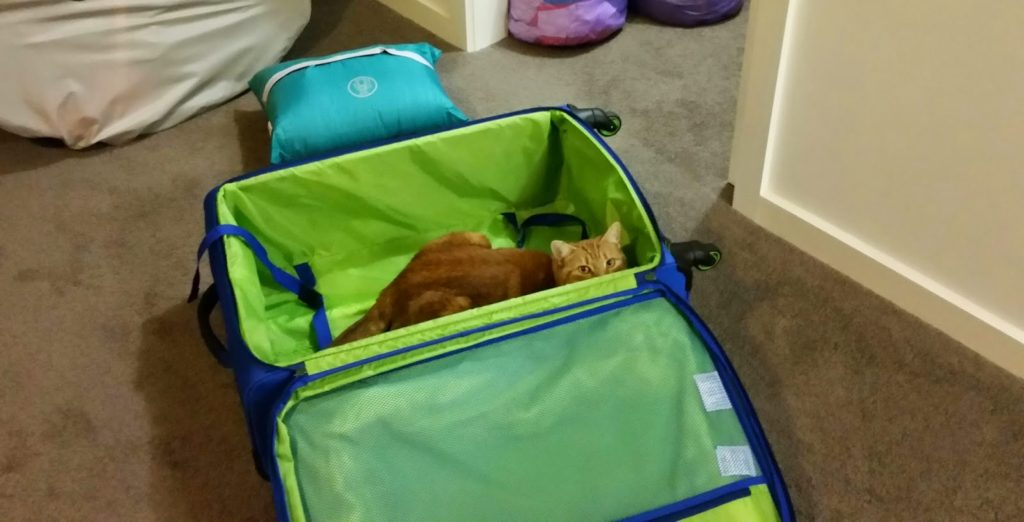 Lily in our suitcase