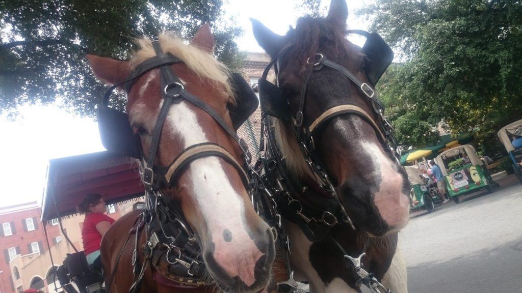 Savannah horses