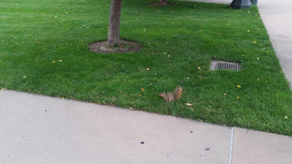 Denver squirrel