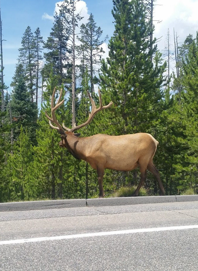 Elk header