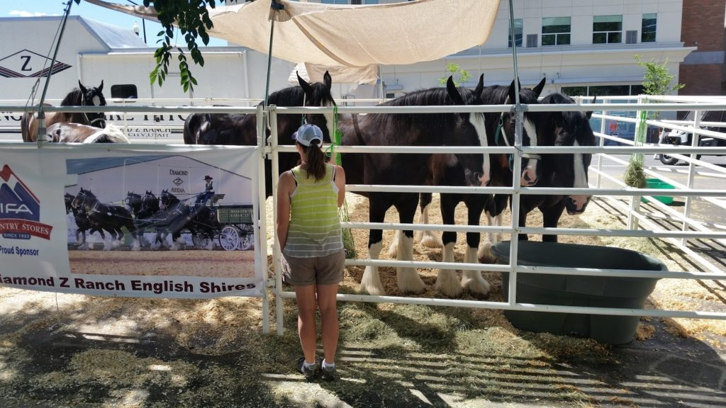 Linne Clydesdales