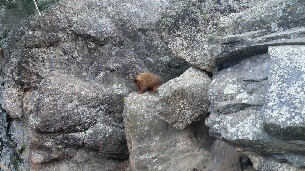 Mt Rushmore squirrel
