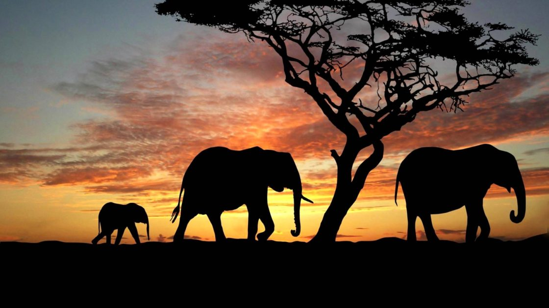 Africa silhouettes