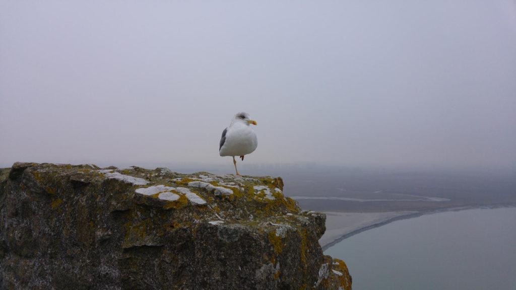 Seagull at Mont Saint-Michel